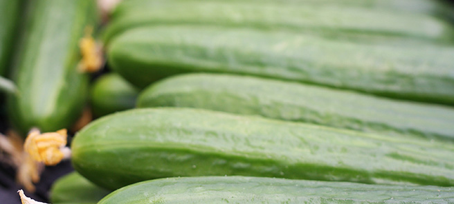 cucumbers postharvest