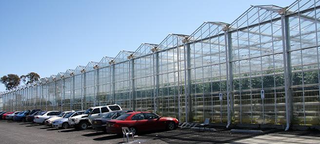 guyra greenhouse