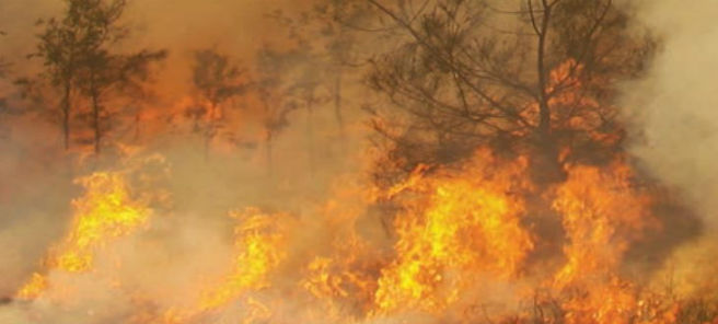 Bushfire 6